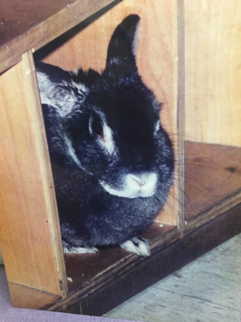 1998: Frisky, the bunny, lived a long and happy life as the Greenhouse pet